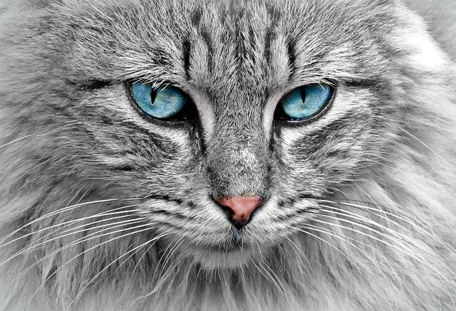מדפי טיפוס לחתולים