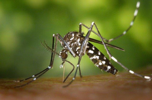 רשתות לבית נגד יתושים