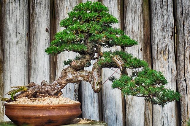 עצים ביתיים